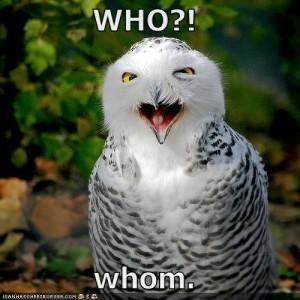 Owl_Who